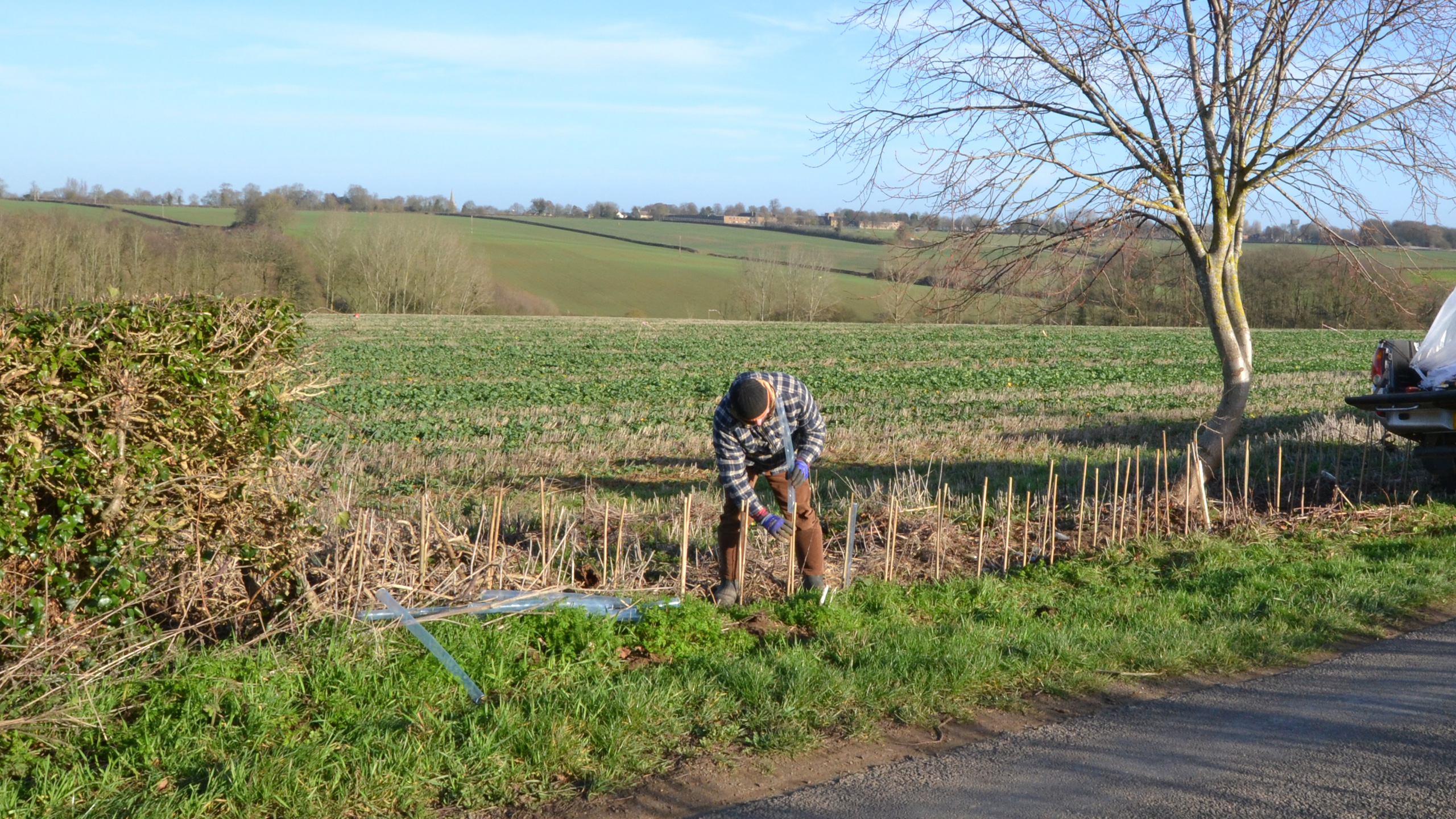 Gapping-Up Hedgerow - Luffenham Road