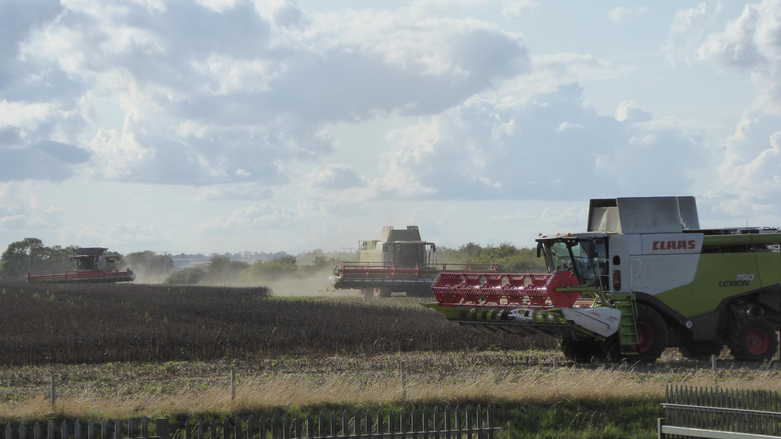Three Claas Combines Harvesting Beans - 100ft Header Total Width!